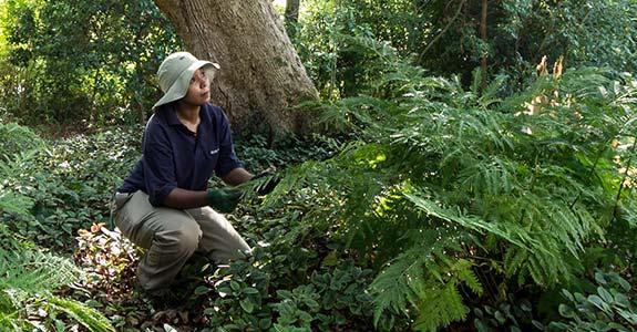 Meet Head Gardener, Leigh-Ann Louw