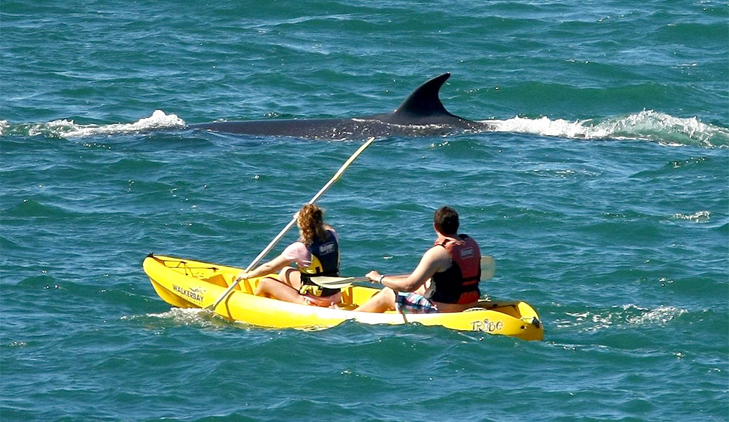 Ocean Kayaking with Walker Bay Adventures